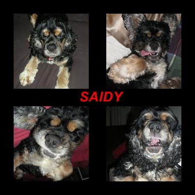saidy